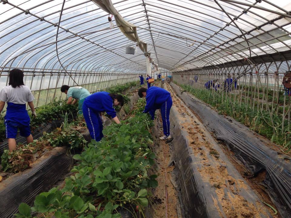 イイジマ農園_高校生農業体験