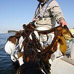 横須賀で漁師をしてみませんか?安浦港佳栄丸がインターン募集。