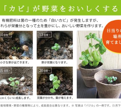 bashil_grow_process